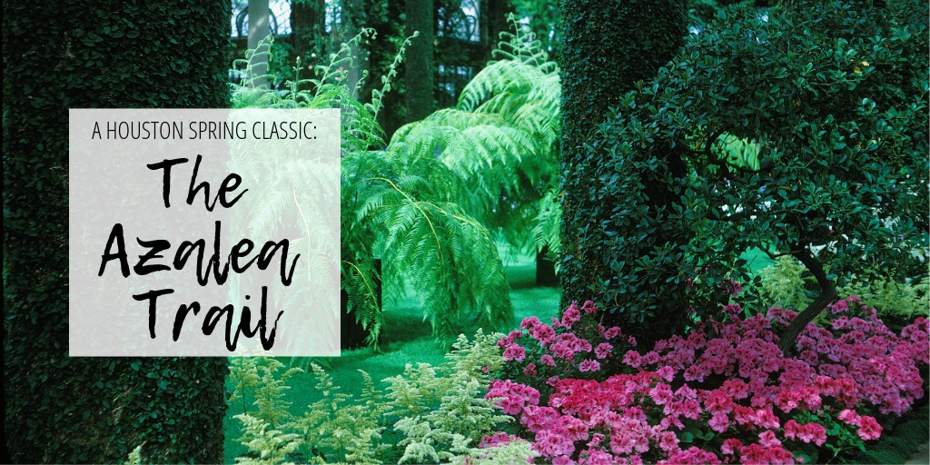 Spring doesn't start in Houston until the Azalea Trail says so! Friday, March 1st-Sunday March 3rd the Azalea Trails open in full bloom. Walk the beautiful trail as the blooms of srping usher in the new season.