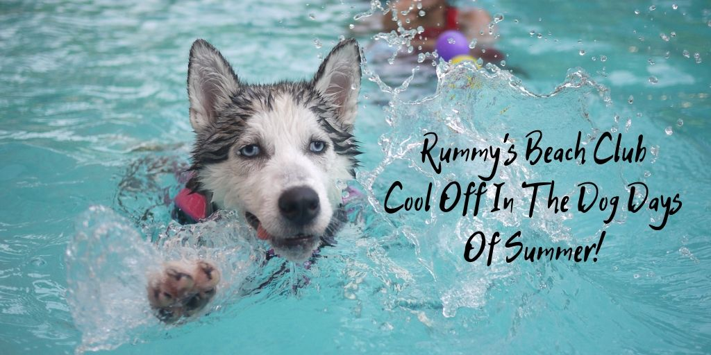 Cool off during the dog days of summer! Houston actually has a swimming club for dogs and humans. It's called Rummy's Beach Club!